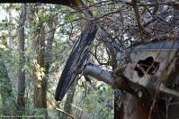 ranwhenparked-renault-4cv-woods-11