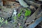 ranwhenparked-renault-4cv-woods-3