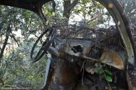 ranwhenparked-renault-4cv-woods-9